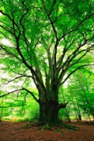Mediation Preparation– Don't Forget Your Decision Tree