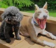 Mediation styles can run the gamut from poodle to pit bull. Where do/should you fit?